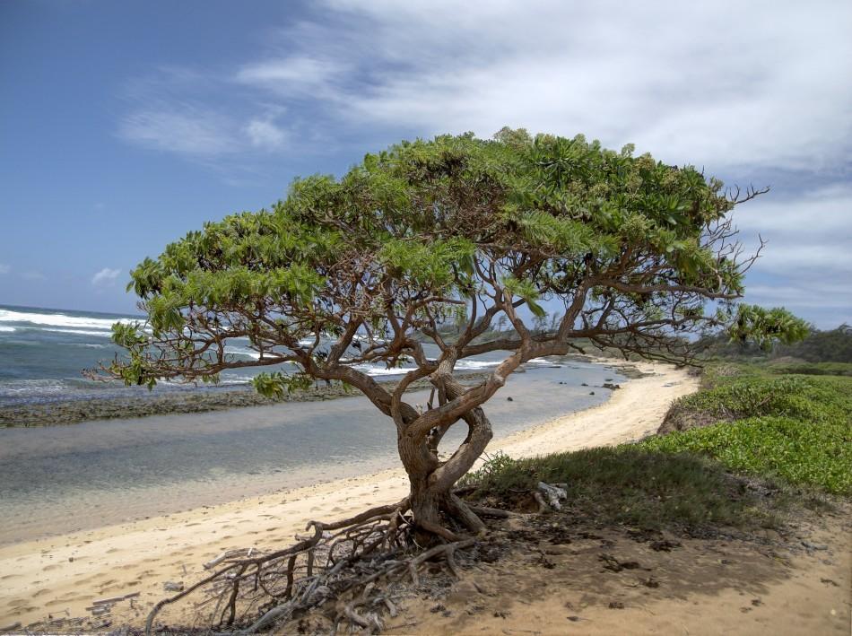Windswept Kauai