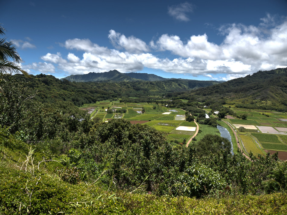 Kauai River Valley