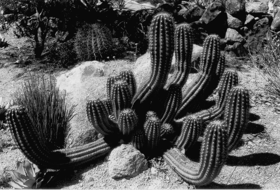 Spreading Cacti