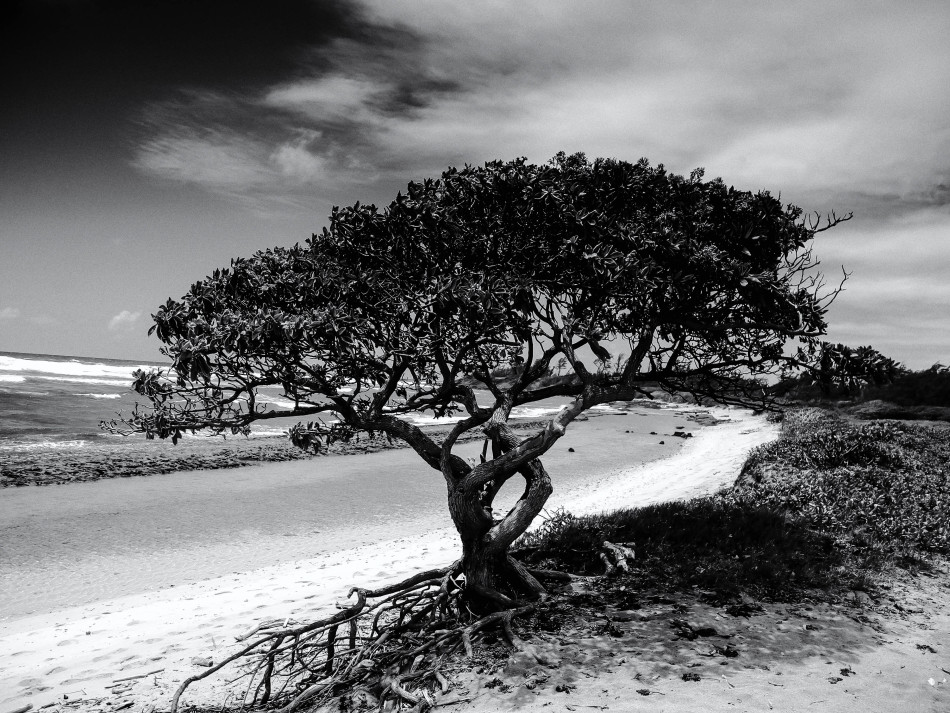 Beach Tree-BW