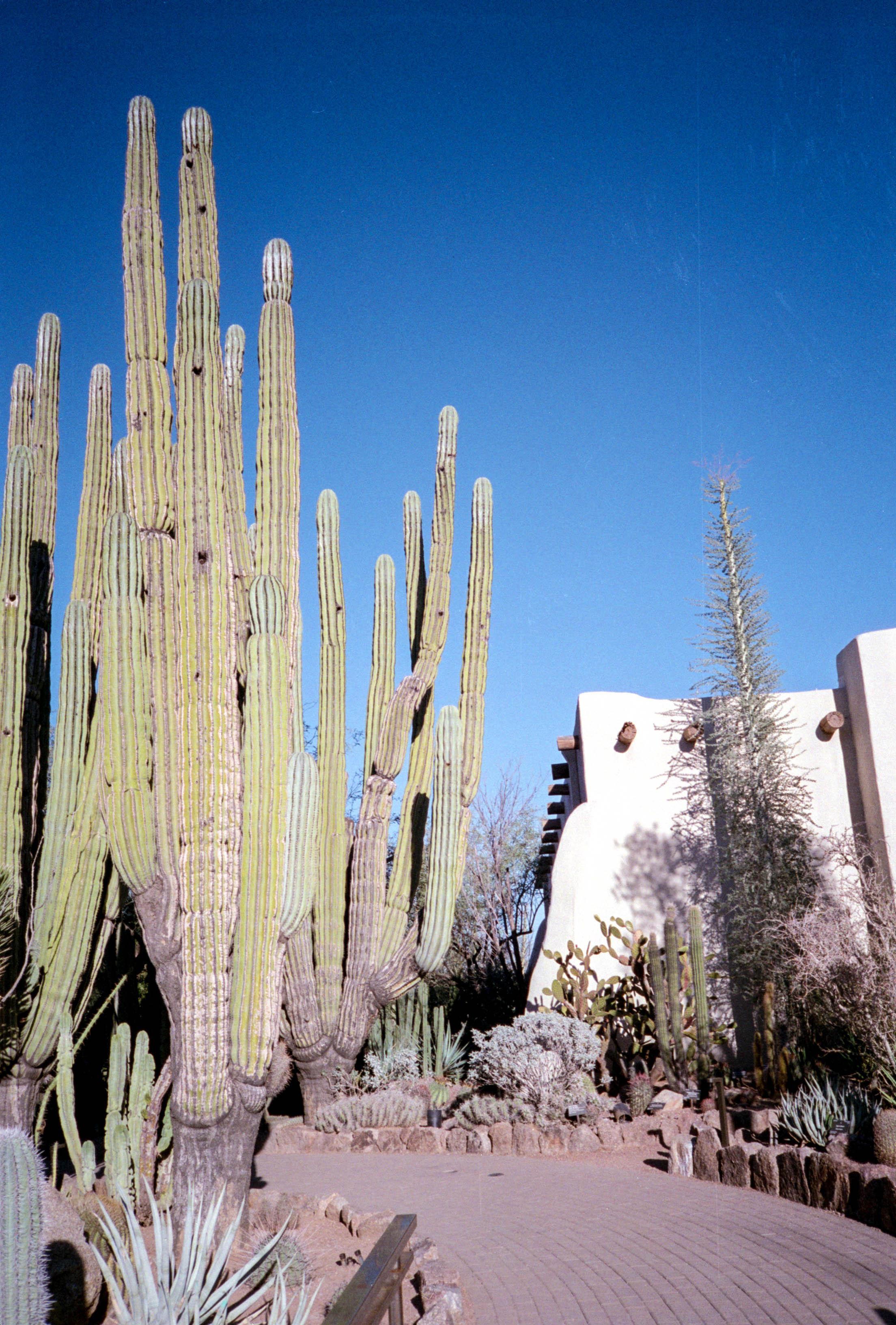 Cactus Grove