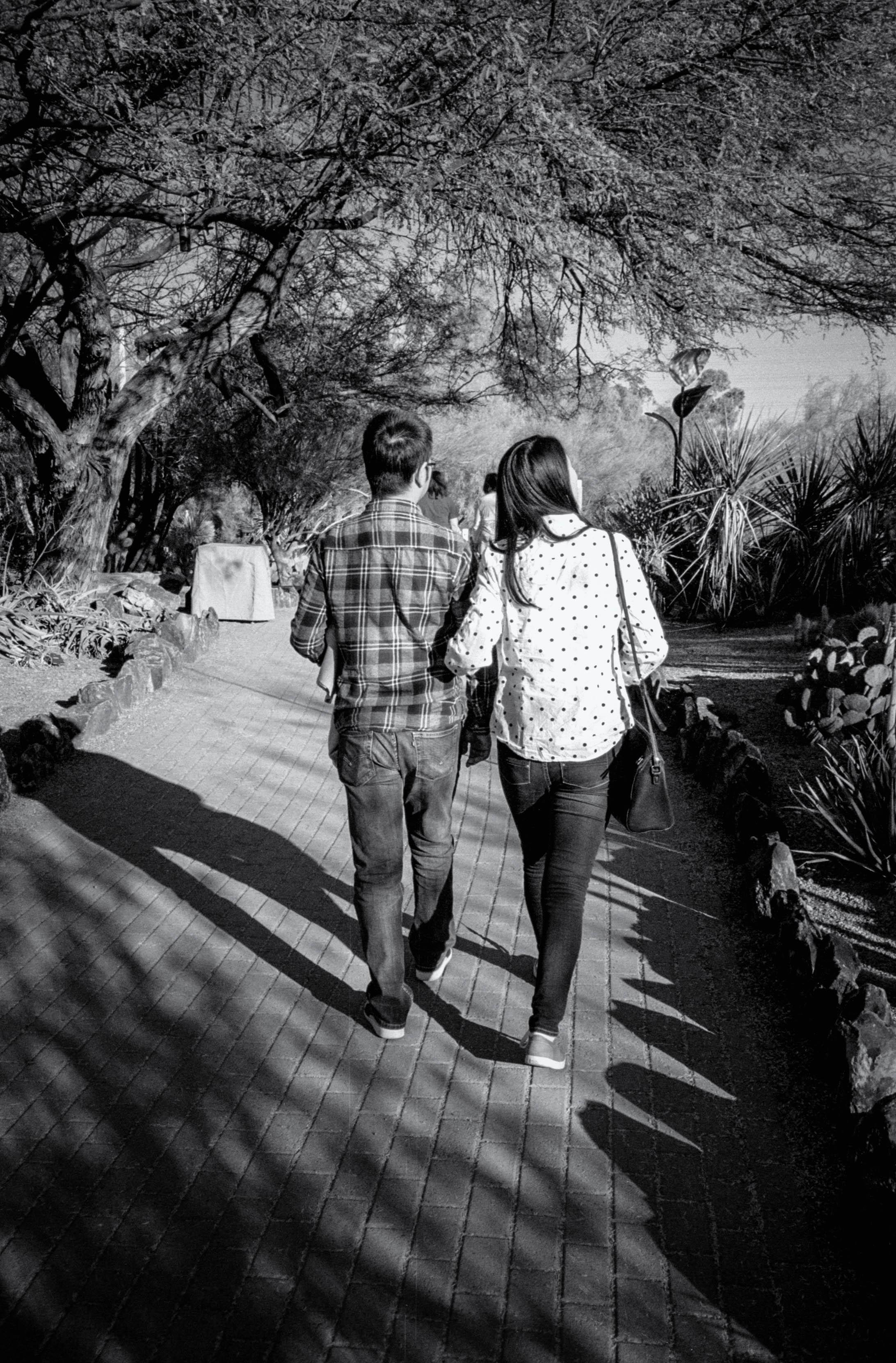 Romantic Walk Through the Garden
