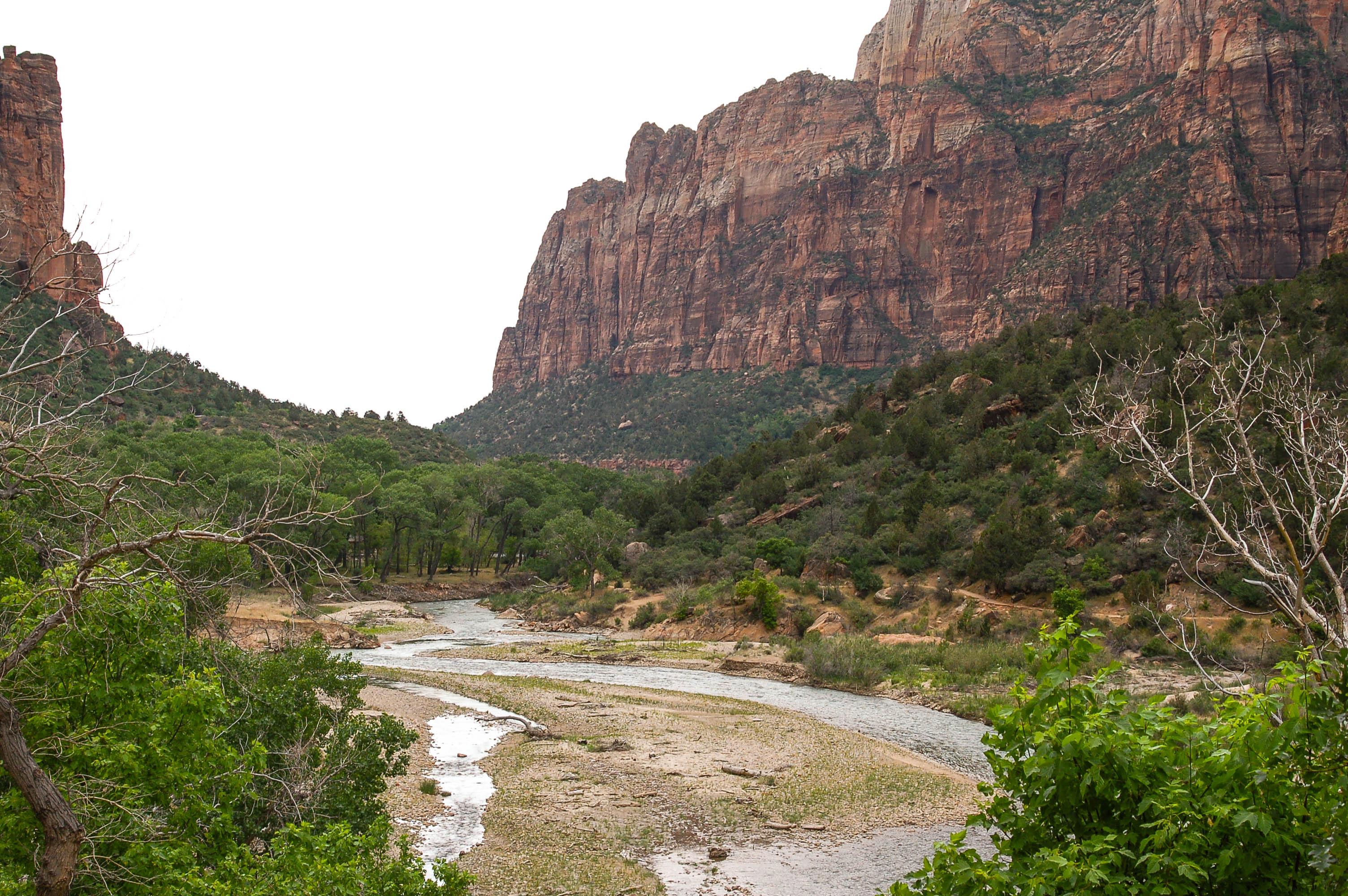 Stream in Zion National Park