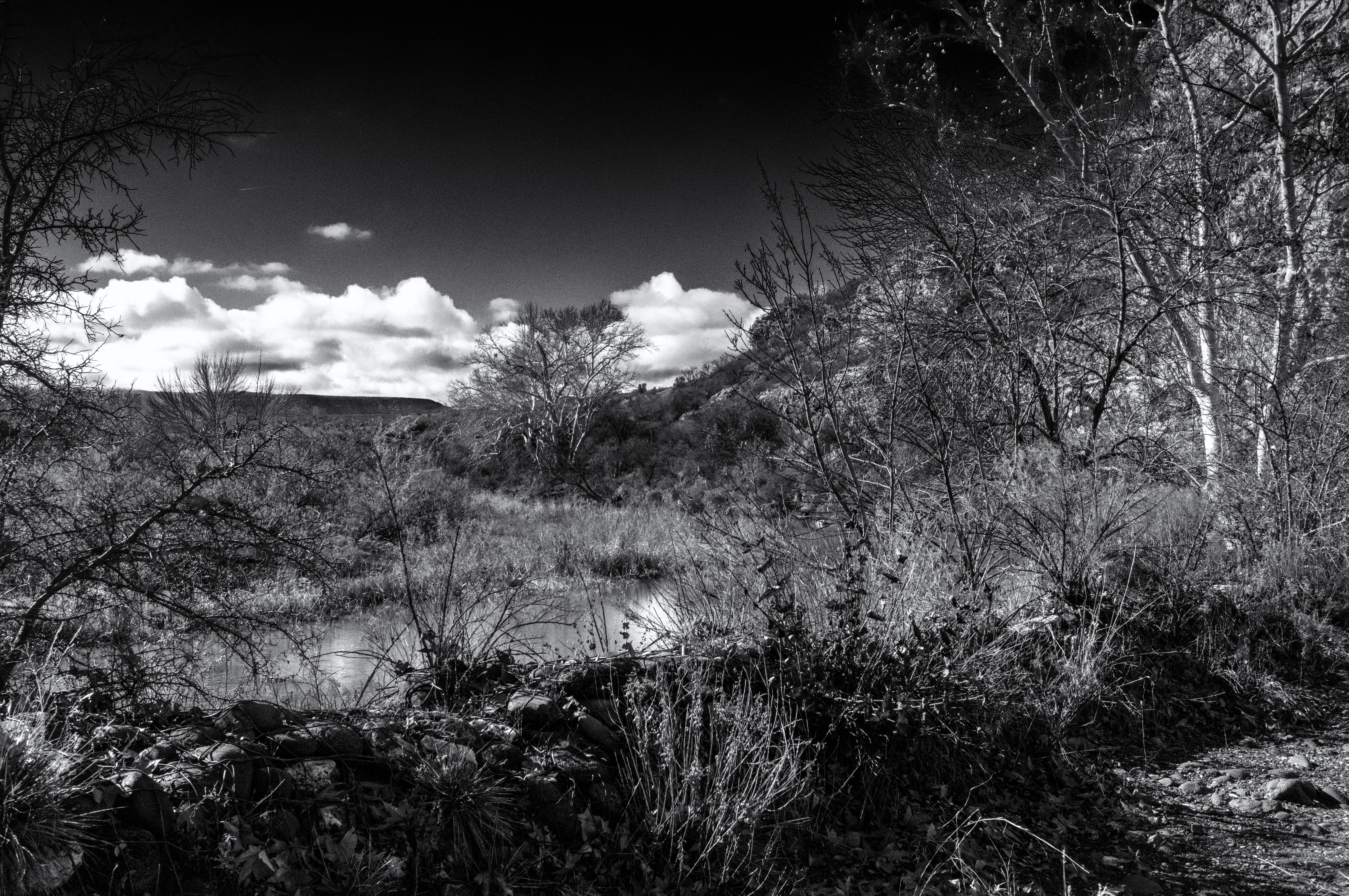 Sunny Winter Day at the Stream-BW