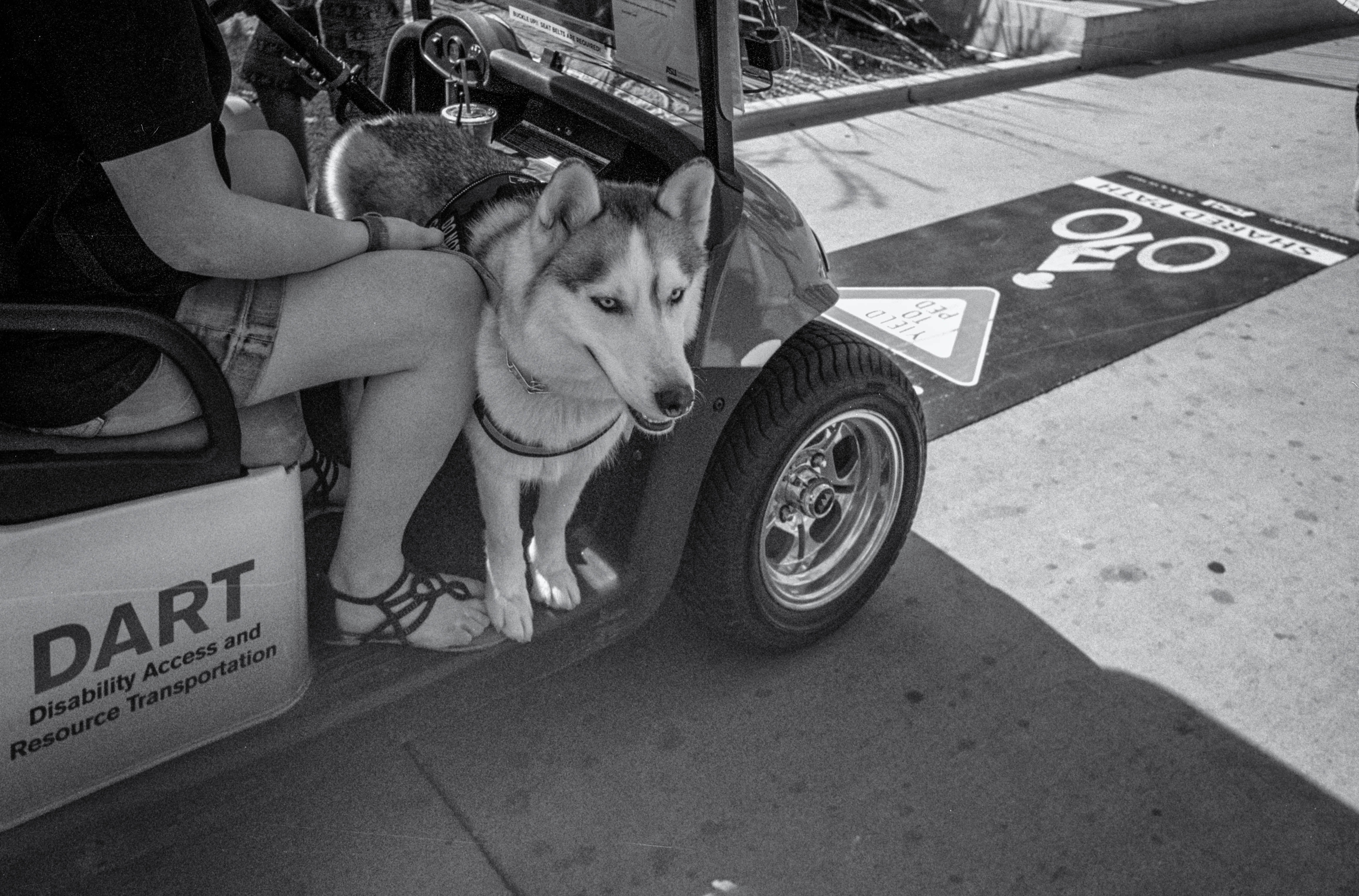 Paws for a Ride